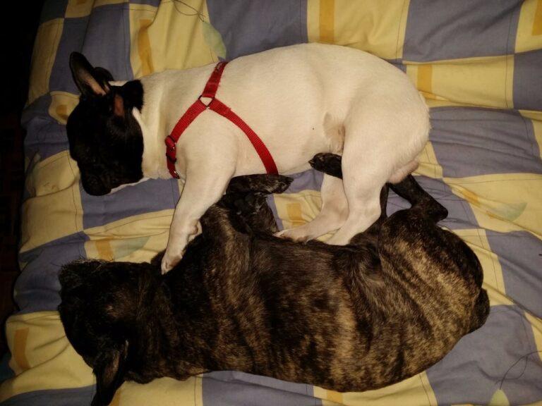 Peke y Pocho dormidos
